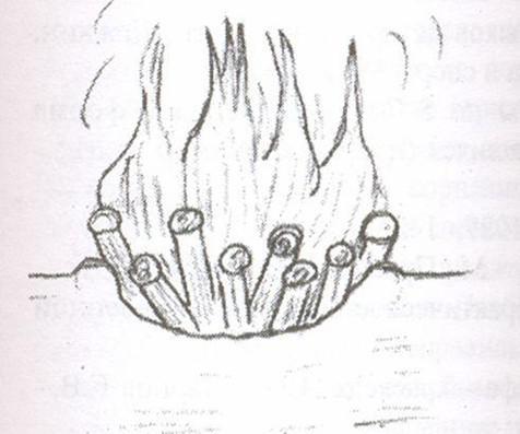 костёр яма