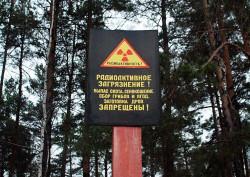 Радиация: накопление в грибах, ягодах и травах.