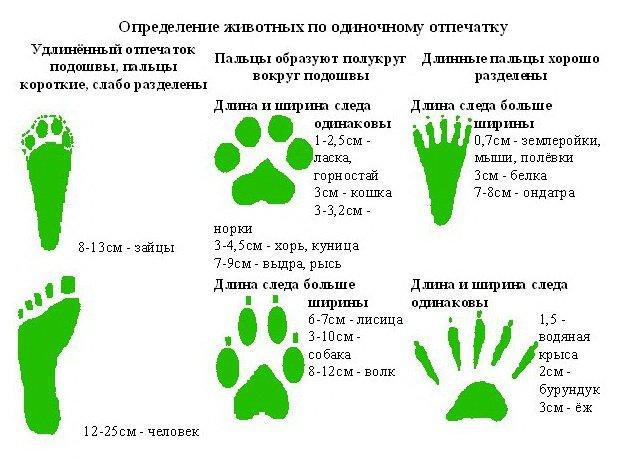 следы определение животного