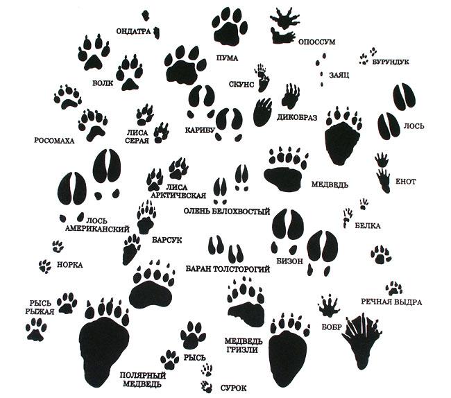 следы различных животных фото
