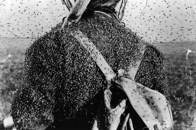 Комары заедают человека