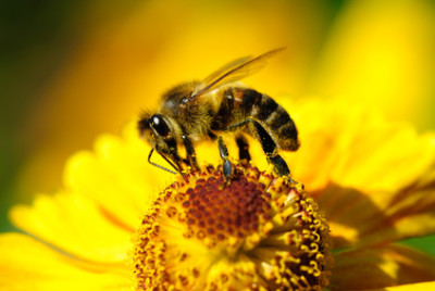 Пчёлка на цветке