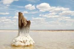 соль на дереве кристалы соли