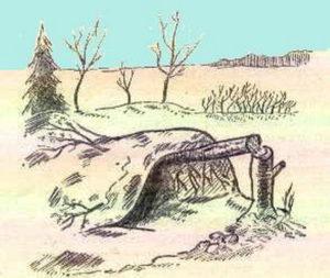 упавшее дерево шалаш