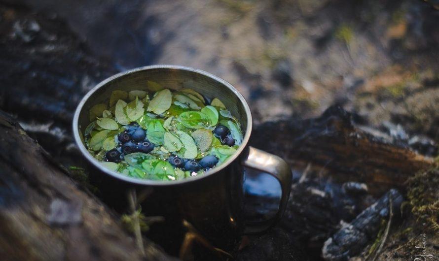 Чай в походе (часть первая): Лесные ягоды.