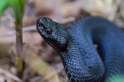 фото красивой змеи