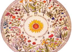Цветочные часы Линнея. Определение времени по цветам.