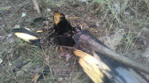 промокший лес как развести костер
