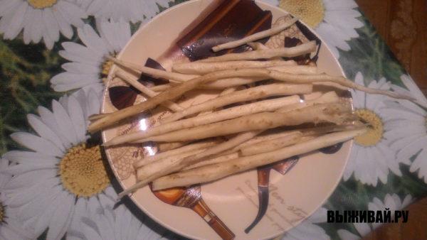 корни обуванчика в пищу