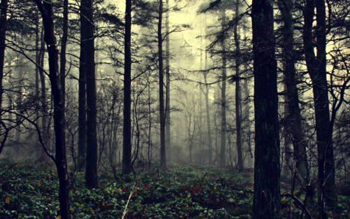 стремный лес