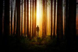 один в лесу закат