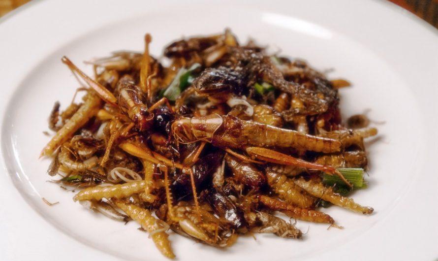 Топ 5 съедобных насекомых в России. Пища для выживания.