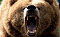 как выжить при встрече с медведем